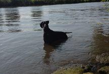 Cooper dog:)