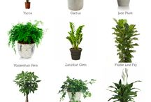 Plants & More / Plants, Foliage & more