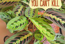Planter til lejligheden