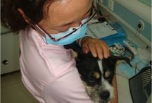 Cure with Care (Professional Education) / Our veterinary training program works with professionals and grass-roots groups to promote higher animal welfare standards for companion animals. Our spay and neuter and rabies vaccination programs help reduce conflicts between people and animals.