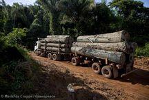 """Madera Ilegal del Amazonas en Europa / Cuando compras un mueble o algo de madera ¿te preguntas su origen? Hace dos semanas descubrimos cómo la madera de desmonte llega a Europa.   Comercializar madera ilegal está PROHIBIDO en la Unión Europea, pero como dicen: """"hecha la ley, hecha la trampa"""".   Ya informamos a las autoridades de Bélgica y los Países Bajos sobre estos envíos, y así evitar que llegue al mercado. Greenpeace continuará exponiendo a la industria de la tala  ilegal que está saqueando el Amazonas."""