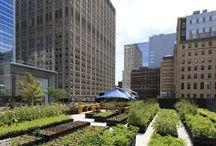Urban Farming / by AECideaX
