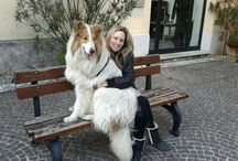 I Settecollies / Collie Americani