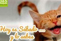 Gatitos graciosos