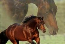 Horses of course!! / by Shona Rutt