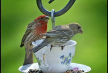 mangiatoia x uccellini