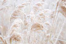 White as snow - nature