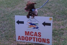 About MCAS / Montgomery County Animal Shelter, 8535 State Hwy 242, Conroe, TX. Nearby communities: Shenandoah, The Woodlands, Magnolia, Spring, Houston. Adopt your new best fur friend! Cats, dogs, puppies and kittens! / by MCAS Pets