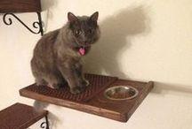 coisas para gato