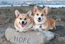 Corgis Rule / by Corgis