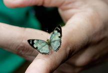 Butterfly,Kelebek