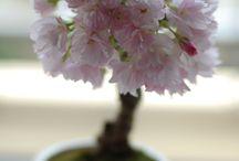 fiori, piante e orto