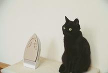 sweet cat / my sweet cat... she is noir