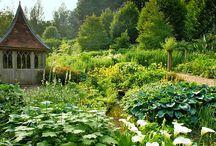 My gardens...