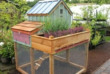 Cool animal beds and sheltering ideas