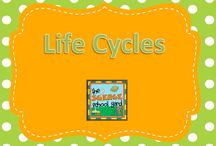 Life Cycles / Butterflies...frogs...and more