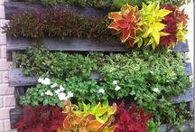 Plantas / Jardín vertical