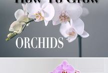 HOW TO GROW EXOTICS