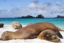 Animales Islas Galapagos / Animales que habitan las islas galapagos
