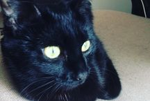 Ma petite chatte Leslie. ❤️ / Elle fait des bêtises, mais on l'aime !