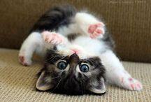 hi i am hello kitty
