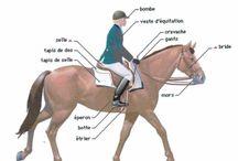 Equitation'