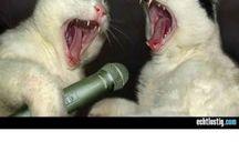 Katzenbabays / Katzenbabys