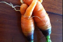 Food Love / Always healthy,  AIP or Paleo recipes that keeps my body happy and strong.  / by Jolaine Wiens