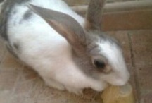 My Baby Bunny ''Conejita'' / Mi Conejita ! My little beauty girl (Bunny) I love her sooo much.