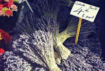 Provence in France♫ ♪ ♥●•٠·˙ ☯ / Aspects Drôme provençal et Provence
