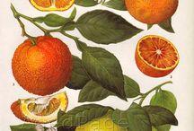 φρούτα σε χαρτί