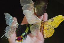 生物/虫/蝶々