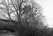 Suomenlinna B&W / Black and white film photos from sea fortress Suomenlinna, Helsinki, Finland