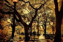 Fall in Savannah / There's no better time to visit Savannah than when the weather cools off! Perfect for exploring, outside dining, and just about anything in between :)