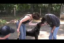 Great videos from York County, SC rescue groups / We have some great rescues in the York County Area. Enjoy these videos of some of the life saving work being done in our area. We believe in working with other groups to help end the abuse, cruelty and pet homelessness problem.  Together we are always stronger.