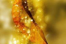 Осень Autumn / Моё любимое время года