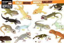 Geckos / by Jessica Renèe Jones
