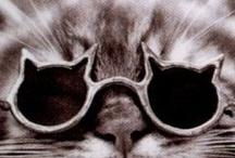 Animals in eyewear / Animals in glasses !