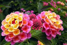 flowers for devk