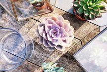 LOVELY THINGS | Botanical