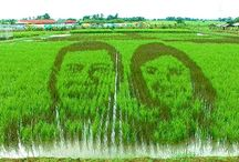 """A Creative Art Design on a rice paddy crafted the face of a famous President / Creative Art Design When it comes to art pairing it with a wild creativity, Filipinos from the Philippines are not left behind when it comes to things like this. To show you what Filipinos can do. here is  a Creative way using a Creative art showing their respect and full support to their famous and respected President. """"Philippines President 2016 Rodrigo Duterte""""."""
