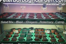 Herb and Vegetable Plants