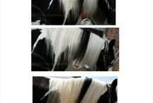 The Horse Extensionist / Mane and tail reconstructions