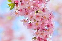 Captivating Spring