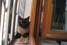 Gatti di Ponte all'Asse