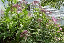 Plants: Flowers, Perennials, Grasses / by Falon Land Studio