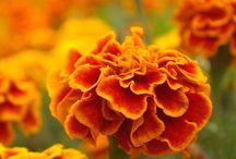 Flowers | Orange / Flowers | Orange