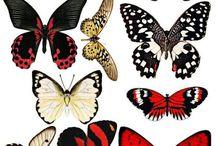 Butterfly/moth