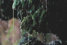 moss and fern...