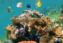 Snorkling, sea and fish